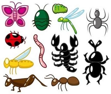 Invertebrata Adalah Pengertian Klasifikasi Dan Contoh Definisi Dan Penjelasan Apayangdimaksud Com